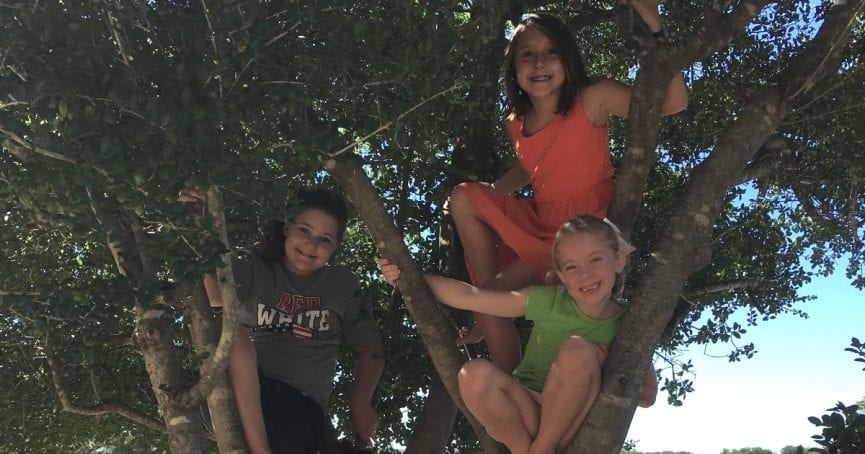 children up a tree